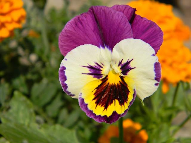 kwiaty, działka, blog, ogród