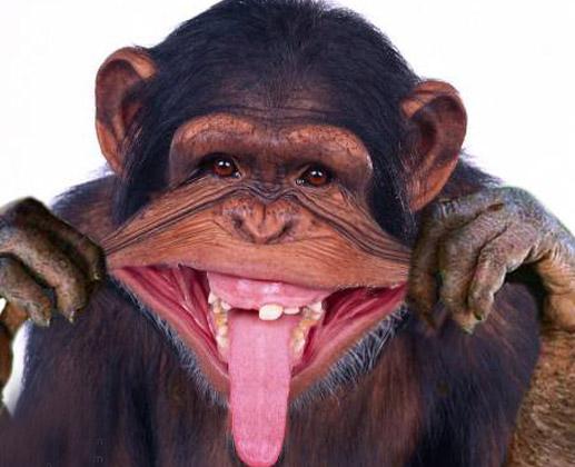 hilarious monkeys - photo #4