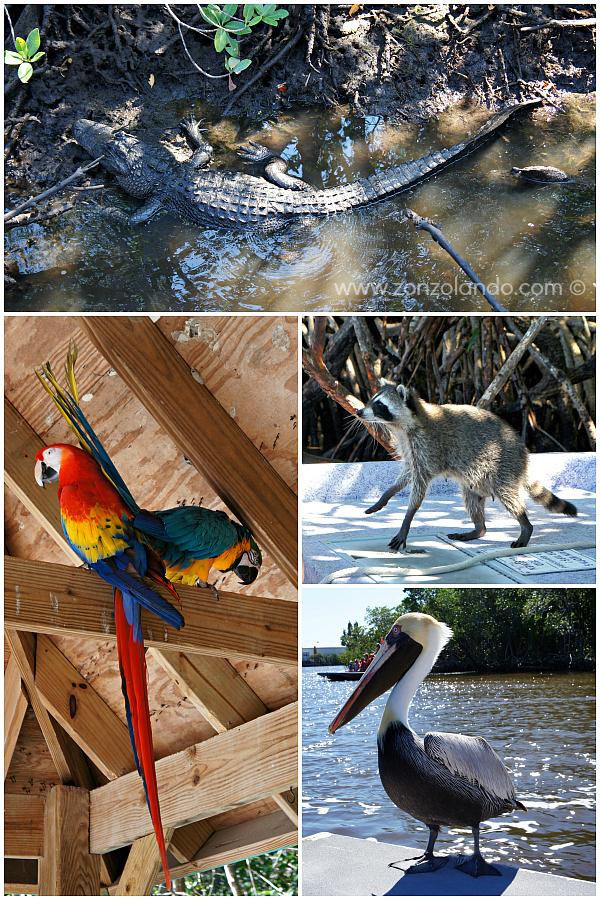 Cosa fare e vedere nelle Evergladesl Florida USA what to see and do America consigli di viaggio trip advices