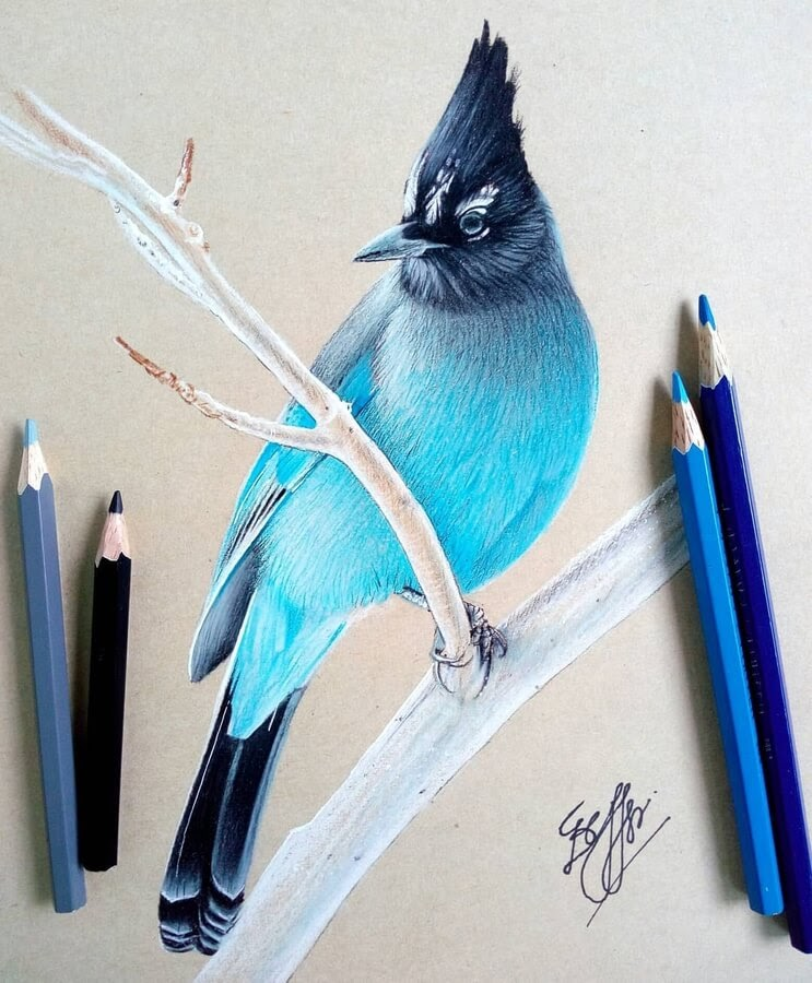 03-Bele-Birds-Drawings-www-designstack-co