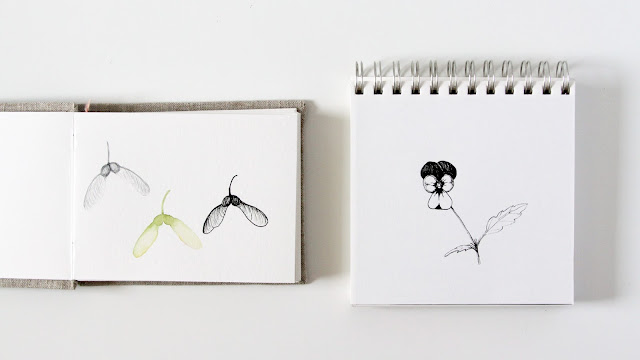 sketchbooks, botanical sketchbooks, maple seeds, viola flower, Anne Butera, My Giant Strawberry