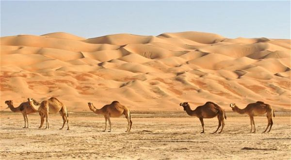 7 Gurun di Arab Saudi Ini Akan di Buat Kota Baru