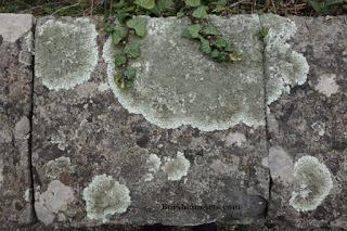 Lichen on Stone Wall Vellano Valleriana Tuscany Italy Springtime Starts