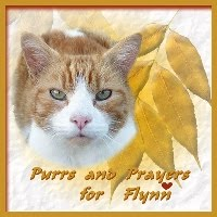 PURRS FOR FLYNN             & MOM JACKIE