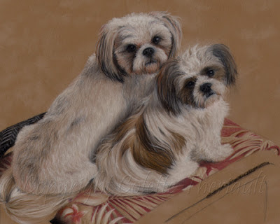 shih tzu dog portrait in progress by pet artist Colette Theriautl