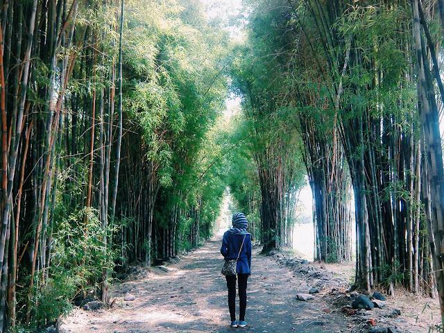 foto hutan bambu keputih