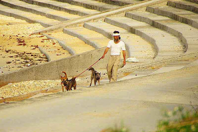3 dogs, Okinawan man, beach