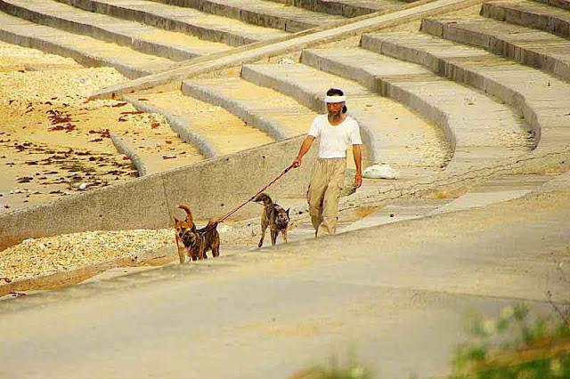 3 dogs, Okinawan man, beach