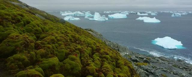 antartica, melting ice, global warming