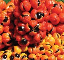 Guaraná tem mais antioxidantes do que chá verde