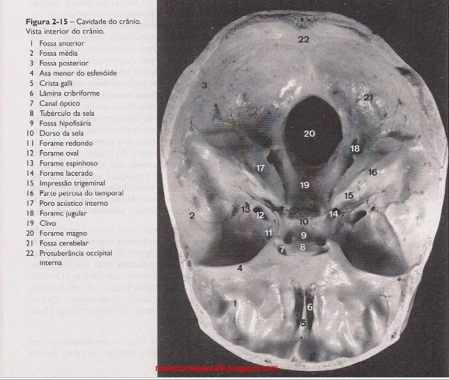 Anatomia Da Face Miguel Carlos Madeira Pdf