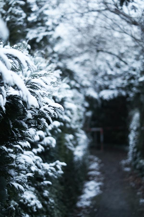 Blog + Fotografie by it's me! - Draussen - Frau Frieda sucht Schnee, verschneiter Fußweg