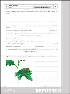 Colegio José Calderón: Actividades de refuerzo y ampliación ...