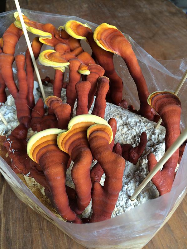 Mushrooming Together