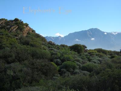 Karoo Desert NBG looking towards the Hex River Mountains