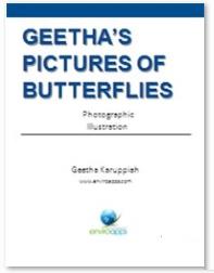 Zoomvin - Butterflies