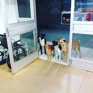 Perros esperan a su dueño en la puerta de un hospital