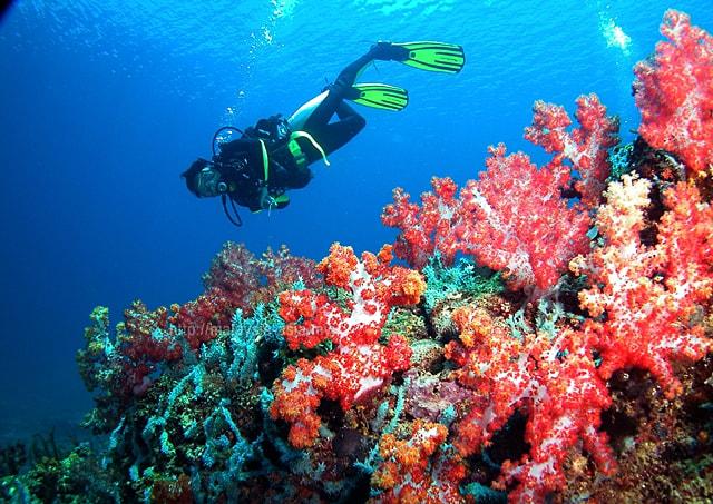 Sarawak Scuba Diving