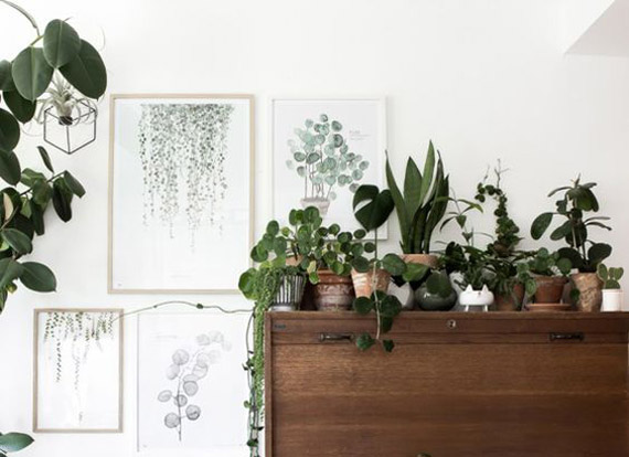 plants combo, green touch deco ideas