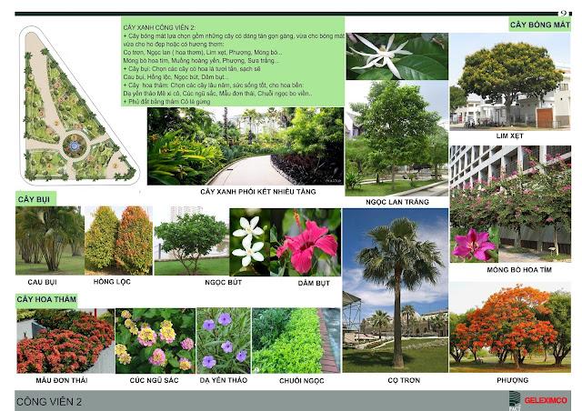 Các loại cây xanh tại The Green Daisy