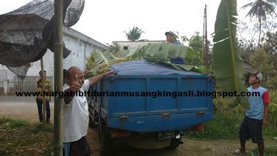 Harga Bibit Durian Musang King Murah Bapak Faisal 082.137.433.114