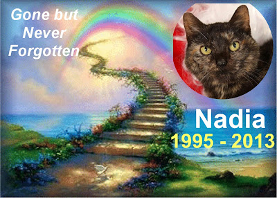 Memorial of cat who lived their whole life in a shelter