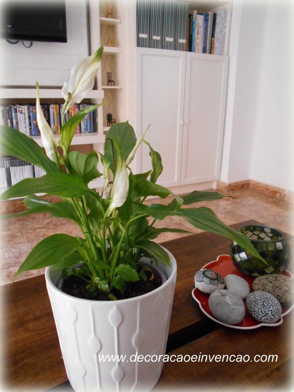4 plantas de interior f ceis de cuidar decora o e - Ver plantas de interior ...