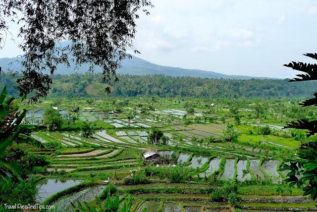 Rizières proches de Tirta Gangga à Bali en Indonésie
