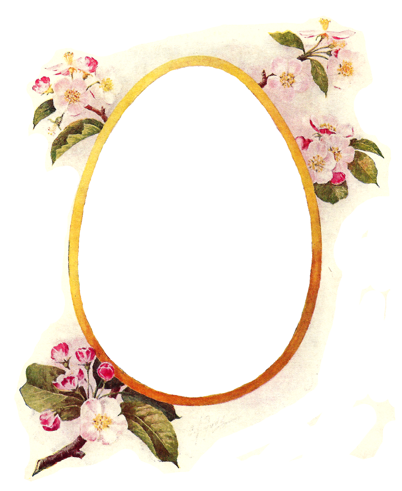 Picture files with transparent backgrounds flowers - pictures of fake birth control pills