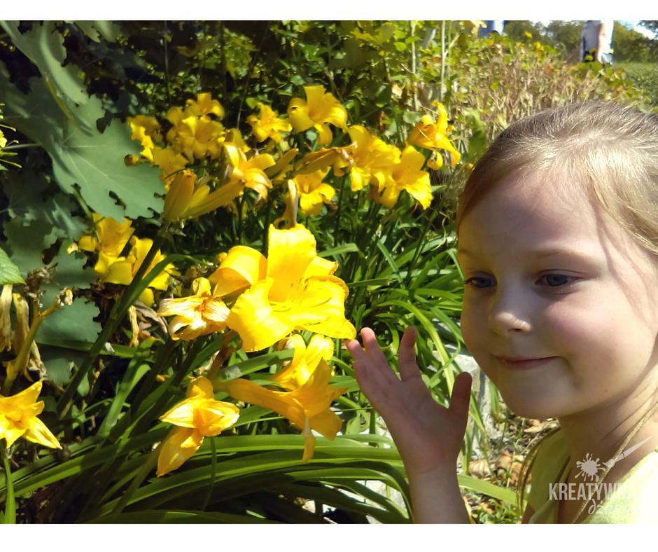 kolekcja liliowce