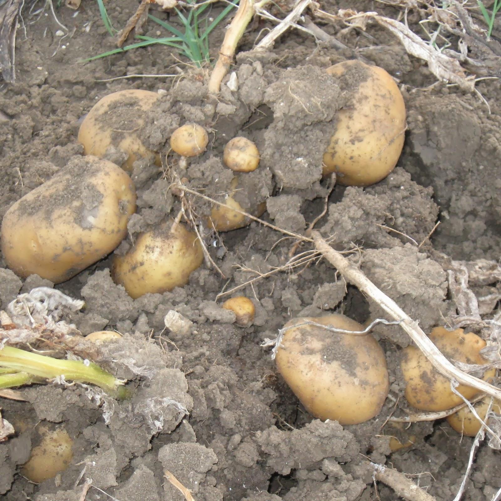 La granja di adriana cosa seminare a marzo for Cosa seminare a febbraio