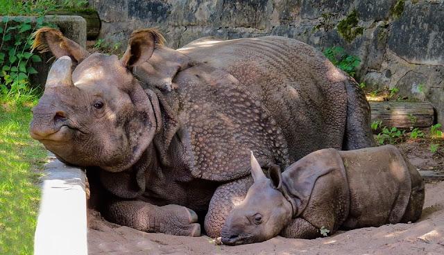 Image: Rhino Mom and Baby, by Gerhard Gellinger on Pixabay