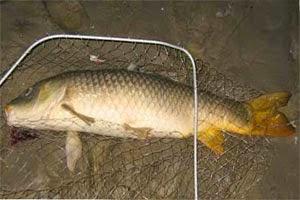 привада для рыбы видео