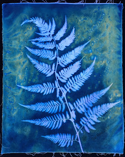 Wet cyanotype, Sue Reno, Image 24