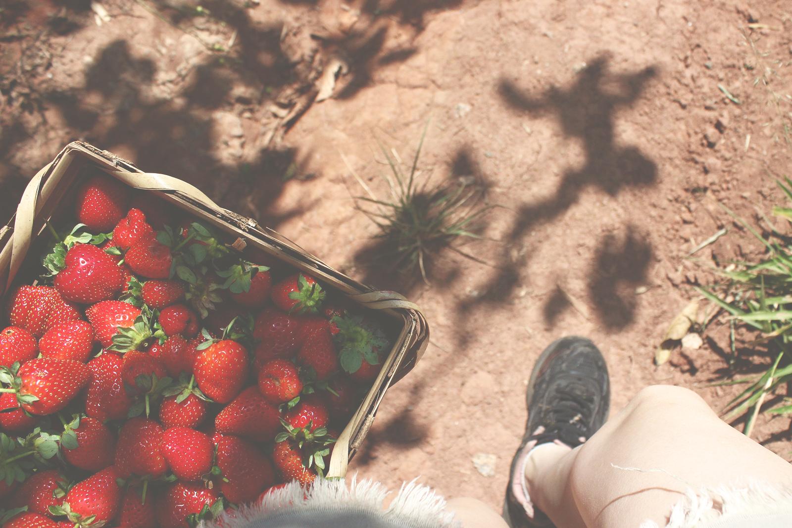 andando cesta morangos
