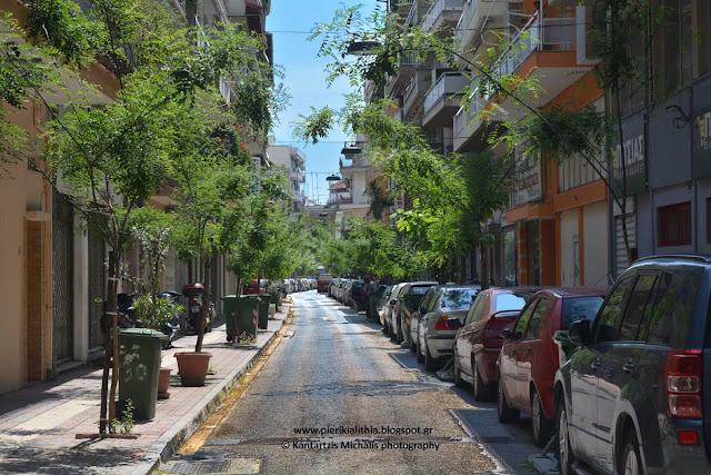 Κατερίνη, μια μικρή πράσινη όαση στην οδό Βύρωνος. Απόδειξη της καλής δουλειάς που γίνεται στην Αντιδημαρχία πρασίνου του Δήμου Κατερίνης