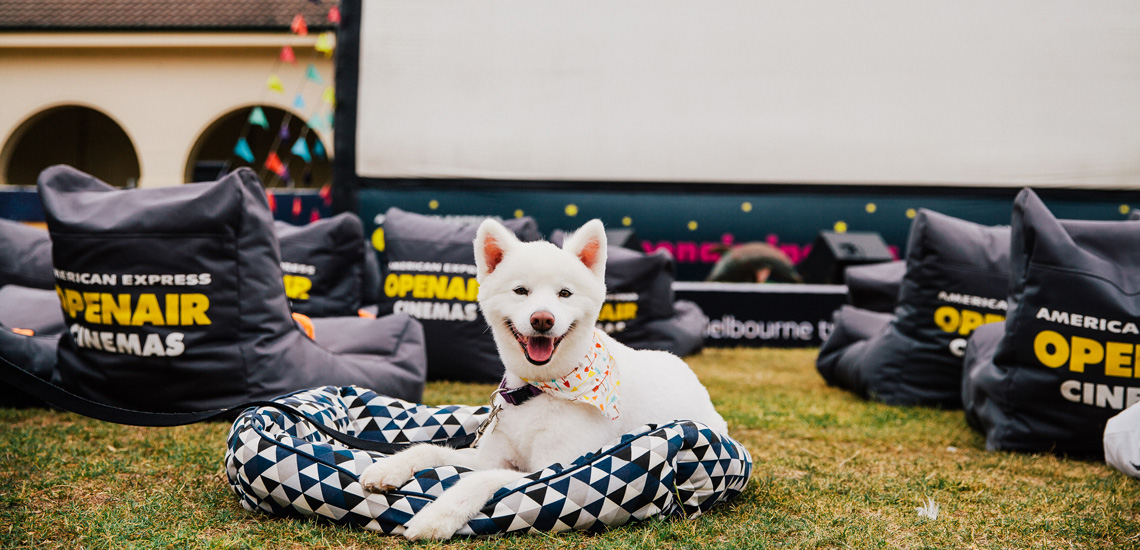 Smiling white puppy wearing dog bandana at a dog-friendly Openair Cinemas screening