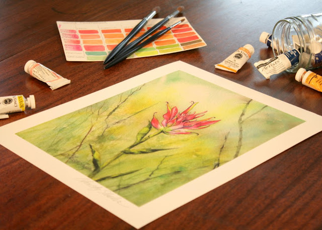 Indian Paintbrush Giclee Fine Art Print in Christy Sheeler Artist Etsy Shop