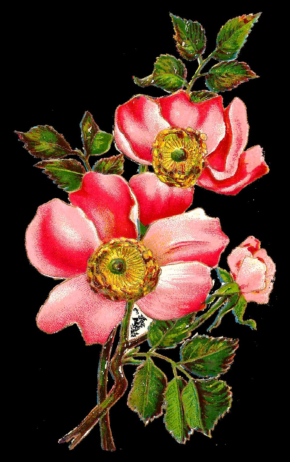 Antique Images: Flower Botanical Art Free Digital Image ...
