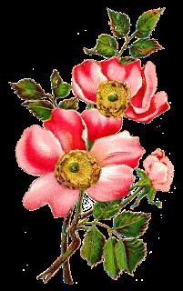 flower rose download image