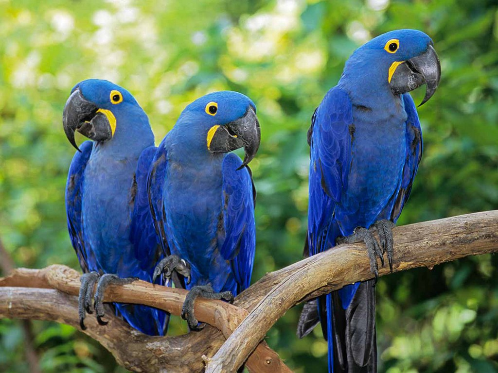 Parrot S Price In India