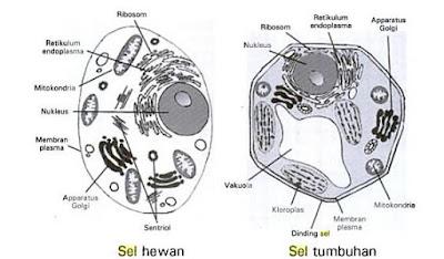 Perbedaan Sel hewan dan Tumbuhan