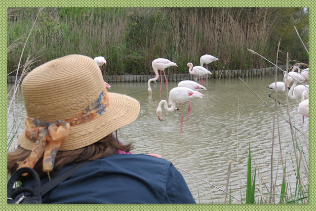 Watching the Pink Flamingos of the Camargue, France