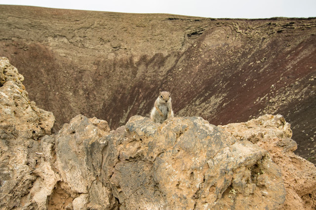 Vulcano Calderon Hondo-Fuerteventura