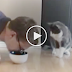 He's Pretending Like He's Eating Some Cat Food…. Now Watch How The Cat Responds, Hahaha!!
