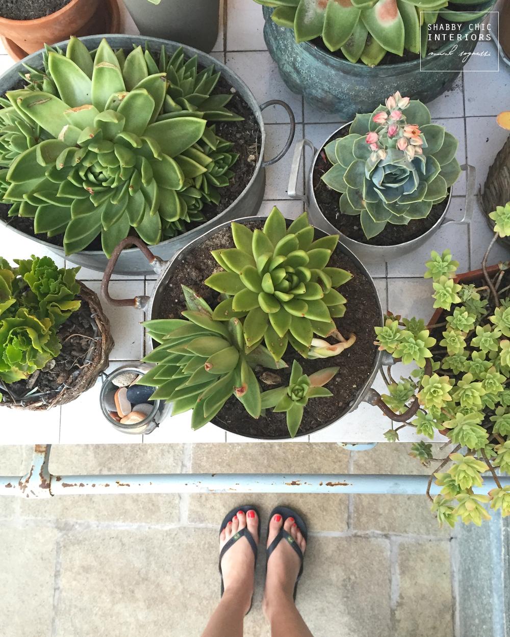 Il mio piccolo giardino shabby chic interiors - Shabby chic giardino ...