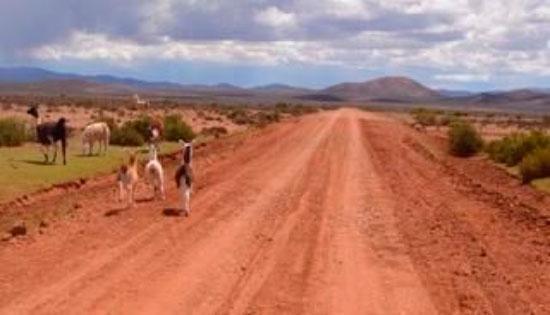 Nueva ruta binacional unirá La Quiaca con Tarija en dos horas de viaje