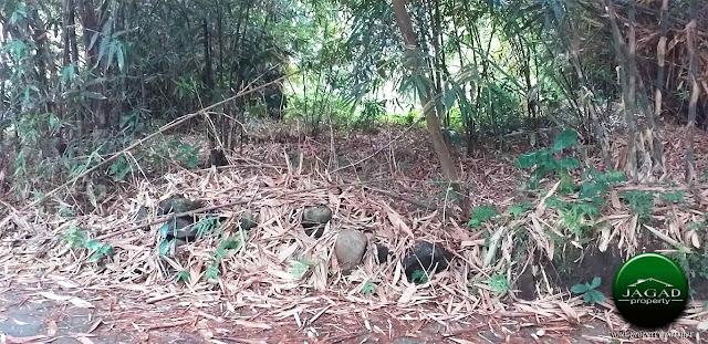 Tanah dekat Pemda Sleman di Pangukan