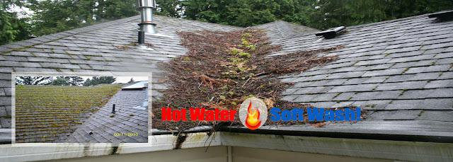 Roof Cleaning Service in New Hampshire with Blue Sky Wash
