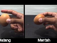 Telur Matang dan Mentah, apa bedanya?